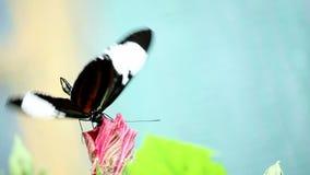 Mariposa en la flor metrajes