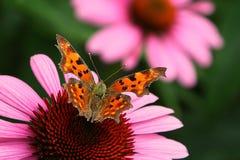 Mariposa en la flor Foto de archivo libre de regalías
