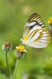 Mariposa en la flor Imagenes de archivo