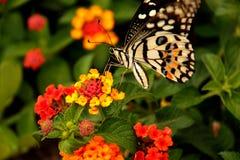 Mariposa en la flor Imagen de archivo