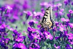 Mariposa en la flor imagen de archivo libre de regalías