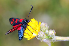 Mariposa en la flor amarilla. Fotografía de archivo