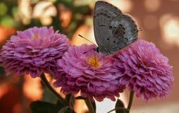 Mariposa en la flor fotos de archivo libres de regalías