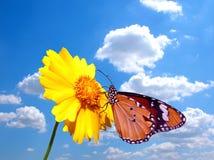 Mariposa en la flor con el cielo nublado Fotografía de archivo libre de regalías