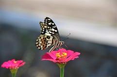 Mariposa en la flor en el jardín fotografía de archivo libre de regalías
