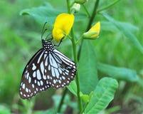 Mariposa en la flor en el jardín imágenes de archivo libres de regalías