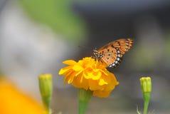 Mariposa en la flor en el jardín imagen de archivo libre de regalías