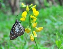 Mariposa en la flor en el jardín fotos de archivo