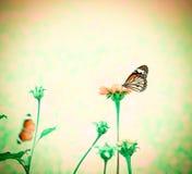 Mariposa en la flor fresca de la belleza fotografía de archivo libre de regalías