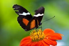 Mariposa en la flor roja Foto de archivo
