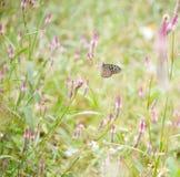 Mariposa en la flor rosada Fotos de archivo