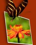 Mariposa en la foto de la flor Imagenes de archivo