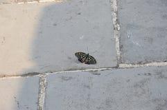 Mariposa en la Gran Muralla de China Fotos de archivo