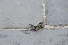Mariposa en la Gran Muralla de China Imagen de archivo libre de regalías
