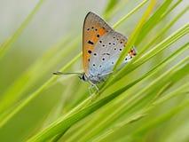 Mariposa en la hierba Fotografía de archivo