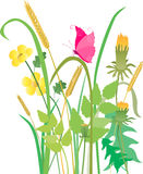 Mariposa en la hierba Foto de archivo libre de regalías