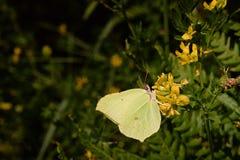 Mariposa en la hoja fotografía de archivo