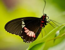 Mariposa en la hoja Fotos de archivo libres de regalías