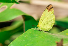 Mariposa en la hoja imágenes de archivo libres de regalías