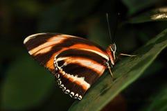 Mariposa en la hoja Fotos de archivo