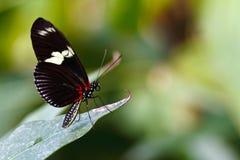 Mariposa en la hoja verde Fotografía de archivo