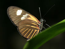Mariposa en la hoja verde Fotos de archivo libres de regalías