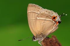 Mariposa en la madera Fotos de archivo libres de regalías