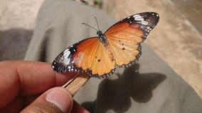 Mariposa en la madera Fotografía de archivo