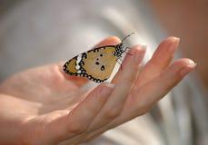 Mariposa en la mano Imágenes de archivo libres de regalías