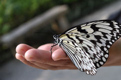 Mariposa en la mano Fotos de archivo