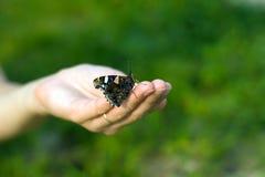 Mariposa en la mano Fotografía de archivo libre de regalías