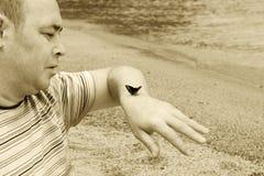 Mariposa en la mano del hombre Fotos de archivo