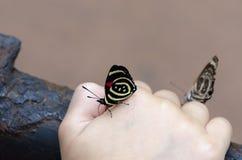 mariposa 88 en la mano del niño Fotos de archivo