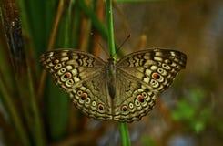 Mariposa en la naturaleza Imágenes de archivo libres de regalías