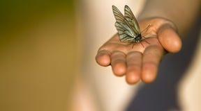 Mariposa en la palma del niño Fotografía de archivo