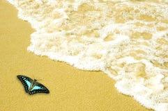 Mariposa en la playa imágenes de archivo libres de regalías