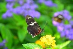 Mariposa en la presentación de la flor fotos de archivo