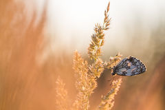 Mariposa en la salida del sol Foto de archivo