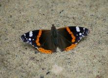 Mariposa en la tierra foto de archivo libre de regalías