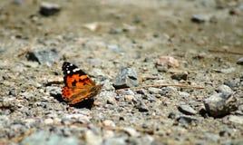Mariposa en la tierra Imágenes de archivo libres de regalías