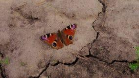 Mariposa en la tierra Imagen de archivo libre de regalías