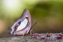 Mariposa en la tierra Fotos de archivo