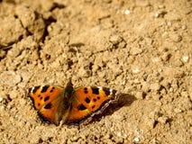 Mariposa en la tierra Imagen de archivo