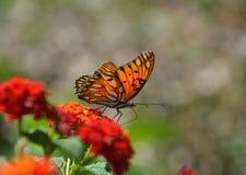 Mariposa en lantana Imágenes de archivo libres de regalías