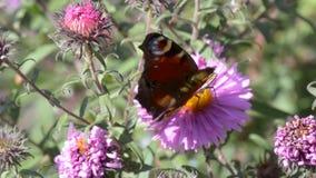 Mariposa en las flores almacen de video