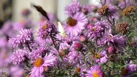 Mariposa en las flores almacen de metraje de vídeo