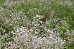 Mariposa en las flores blancas imagenes de archivo