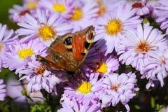 mariposa en las flores florecientes de la primavera Fotos de archivo libres de regalías
