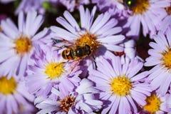 mariposa en las flores florecientes de la primavera Imagen de archivo