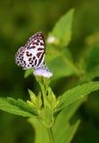 Mariposa en las flores púrpuras Fotografía de archivo libre de regalías